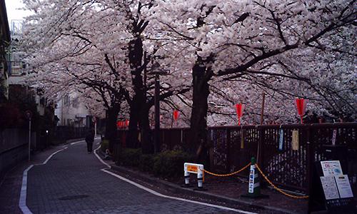 20190404_sakura.jpg